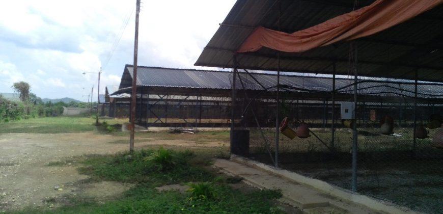 🍀 EI170. Granja Avícola  en Tinaquillo – 3 Hectáreas