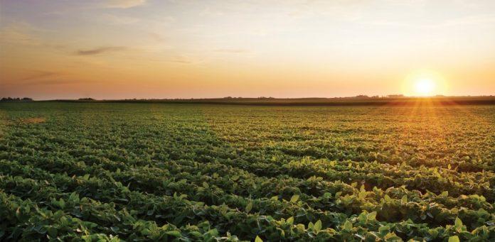 Radiación Agricultura