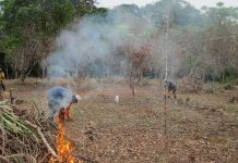 quema calidad suelo