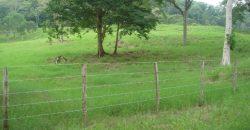 🍀 En venta Finca de 209 hectáreas en sector Santa Rosa, Yaracal, Estado Falcón.